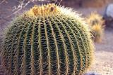 110_Tucson.JPG