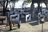 Donkey exhibition in the castle 2820.jpg