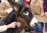 There were rel donkeys too 4690