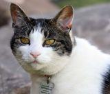 Guard cat at the picnic