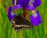 Papillon Parc Nature de Pointe-aux-Outardes
