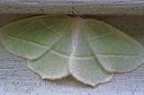 PapillonBaie Trinité