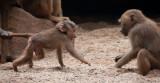 cologne_zoo
