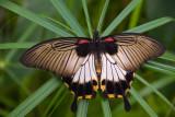 butterflies_etc