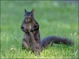 Be  wary of Black Squirrels bearing gifts.