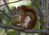 red-nut.jpg