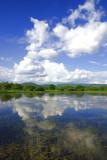 Kafue River Scene