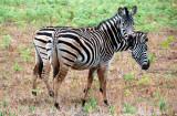 Swaziland.. The Land of Beautiful Wonders