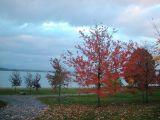 fall trees by cayuga lake...