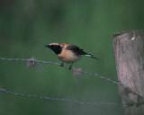 Rare birds in Zeeland 1990 - 2005