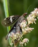 Fishflies, Mayflies, Stoneflies & Caddisflies
