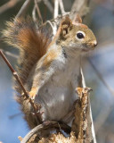 Chipmunks Squirrels & Raccoons