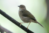 Riverside Warbler