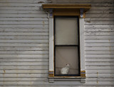 Feline observer, Astoria, Oregon, 2009