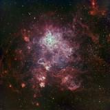 Tarantula Nebula BRC 250 Ha O111 135 120 V2 .jpg