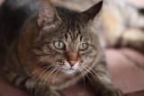 The tomcat