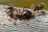 Gallery: All About Ants