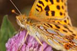 Gallery: Butterflies