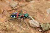 Gallery: Beetles