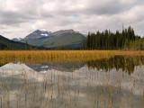 Rampart Ponds