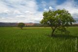 The Pangasinan Countryside