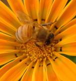 C04 Bees