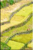 ...in neat little rows along neat little steps...