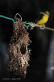 Inching towards the nest
