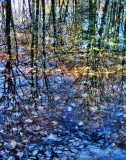 The Fairies' Pond 61