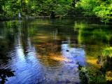 The Fairies' Pond 64