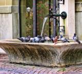 The Fountain Bar