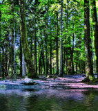 The Fairies' Pond 67