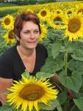 Sunflowers 63