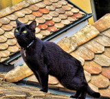 Elvis on  the roof  2