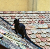 Elvis on the roof 3