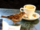 Sharing breakfast with a friend...