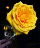 Drinkable rose...