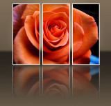 A  rose in a poster....
