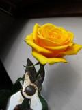 Execution of Rose Boleyn ....
