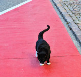 Red carpet treatment....