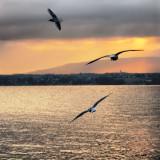 Flight in the golden morning