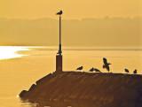 Gulls in early sunlight...