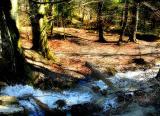 The Fairies' Pond 14