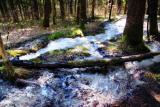 The Fairies' Pond 18