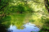 The Fairies' Pond 24