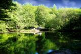 The Fairies' Pond 23