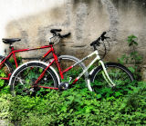 The garden of growing bicycles