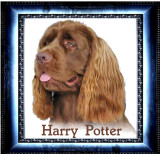 Harry082501E.jpg
