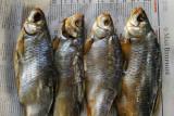 v-day fish