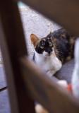 harbour cat